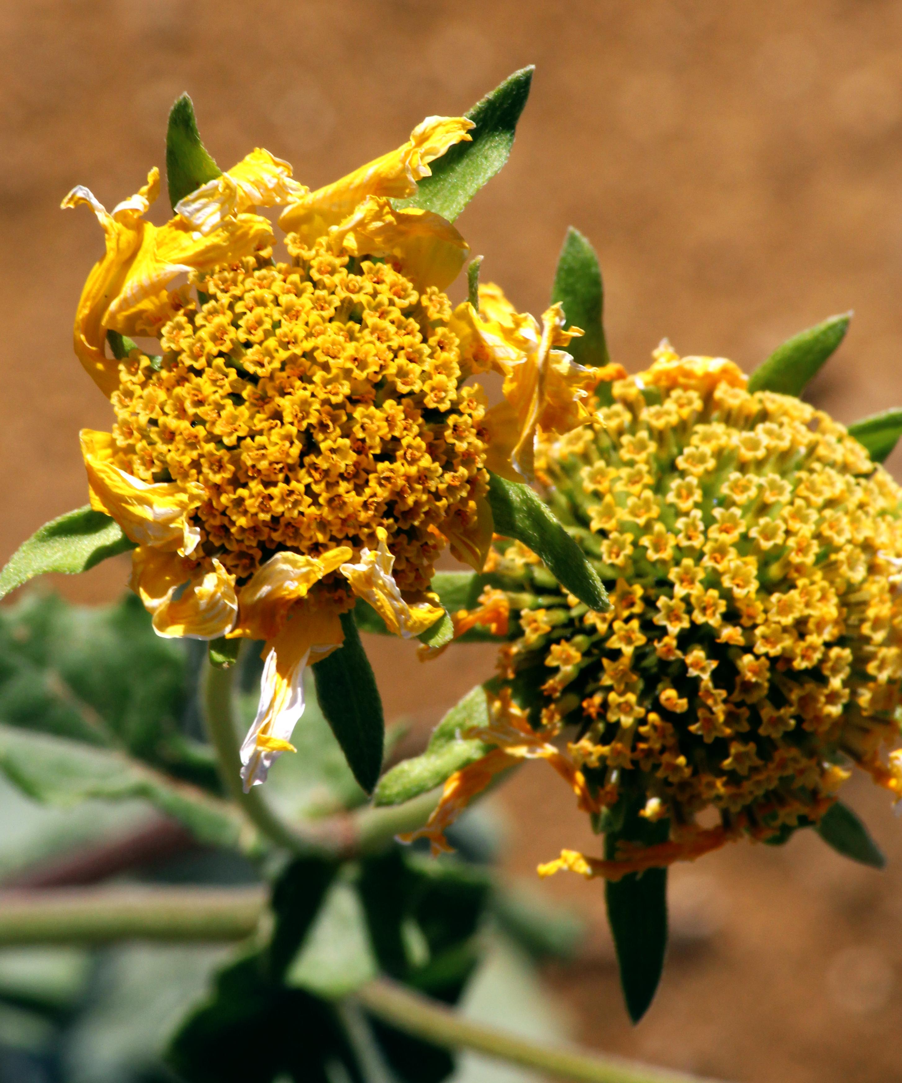 flower, not a grasswren