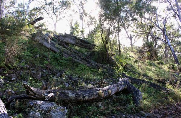 Fallen timber sinking into the earth as moss and lichens spread over its surface and rocks abound. Photo by Emma of Emma Walton Guiding a nature guiding service of South East Queensland