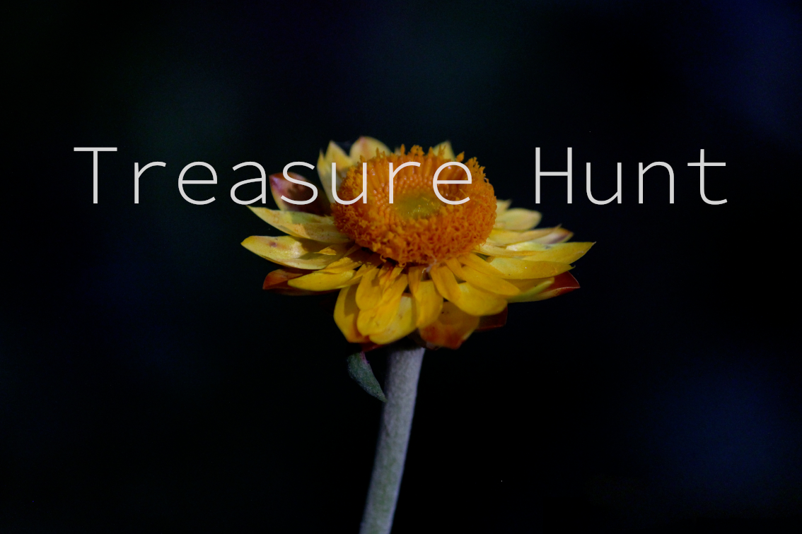Go on a treasure hunt with Emma Walton Guiding, a nature guiding service of South East Queensland.