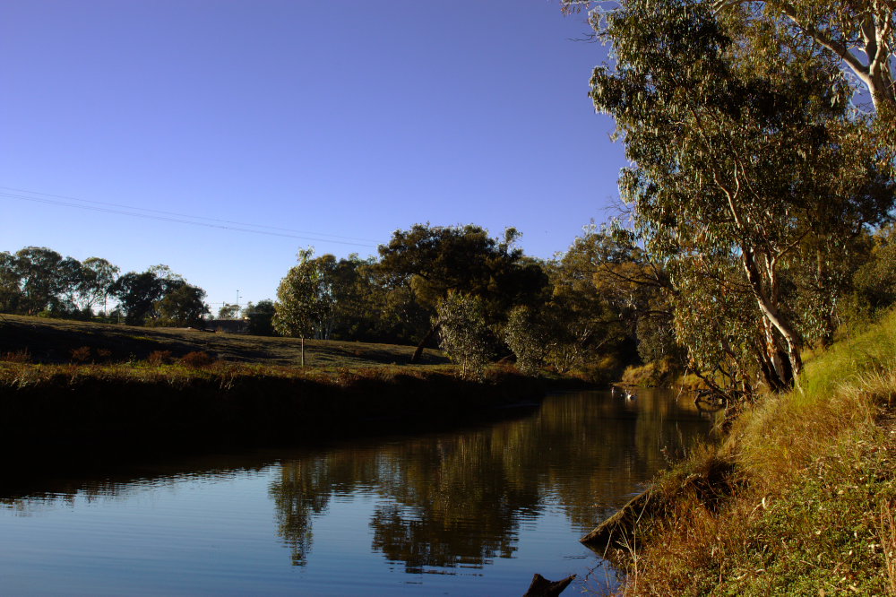 The Condamine River at Henry Joppich Park. Photo by Emma Walton of Emma Walton Guiding, a nature guide of South East Queensland.